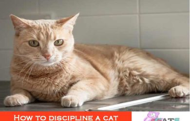 How to discipline a cat