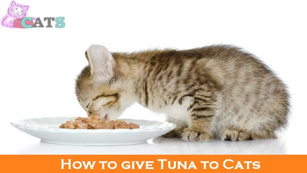 How to give Tuna to Cats