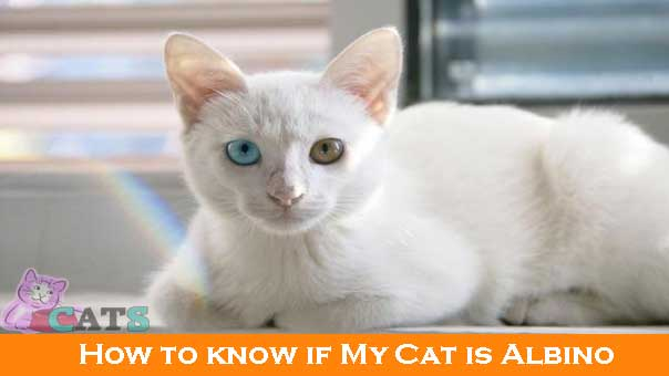 How to know if My Cat is Albino