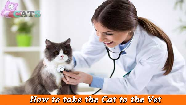How to take the cat to the vet