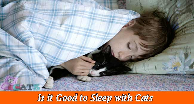 Is it Good to Sleep with Cats