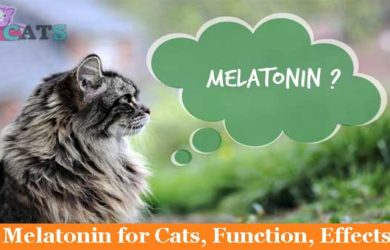 Melatonin for Cats, Function, Effects