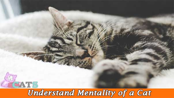 Mentality of a Cat