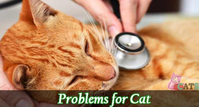Cats Sick