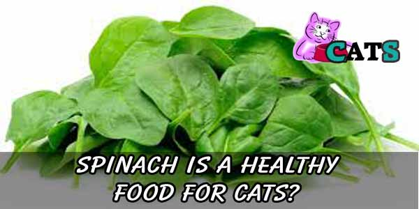 SPINACH A HEALTHY FOOD FOR CATS?