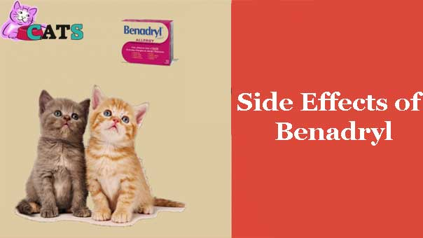 Benadryl for Cats, Side Effects