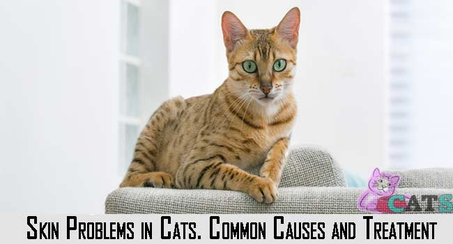 Skin Problems in Cats