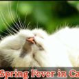 Spring Fever in Cats