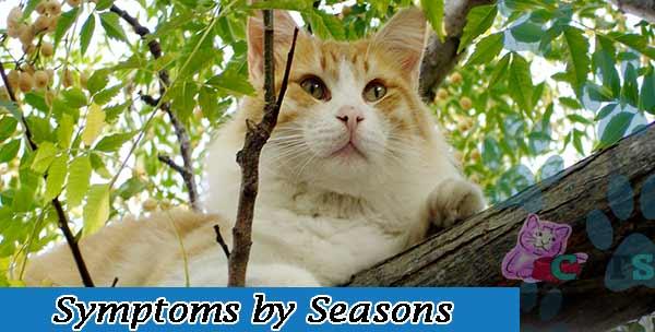 Symptoms by Seasons