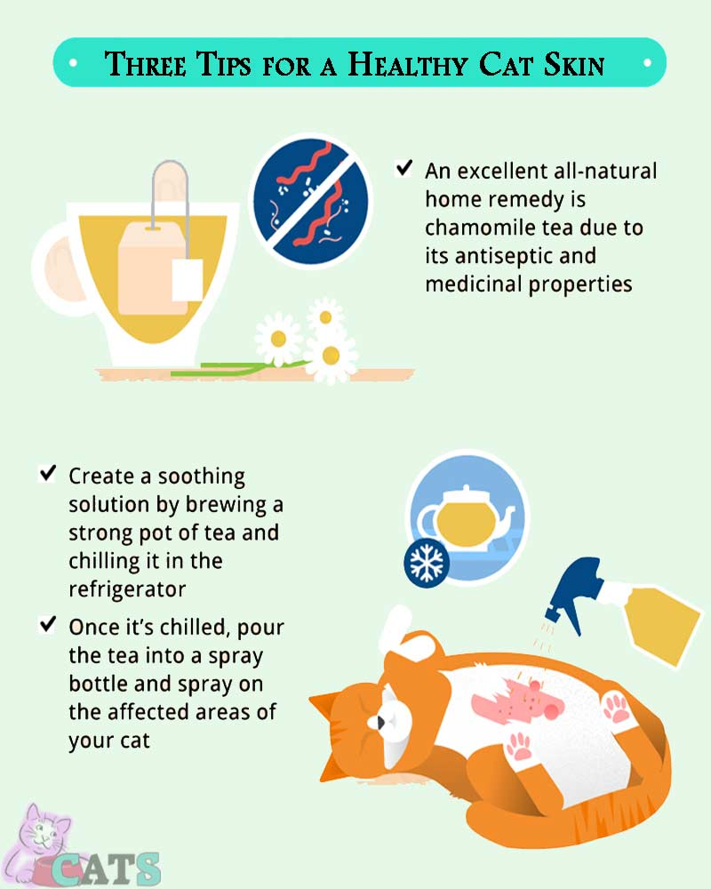 Three Tips for a Healthy Cat