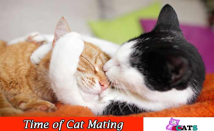 Time of Cat Mating