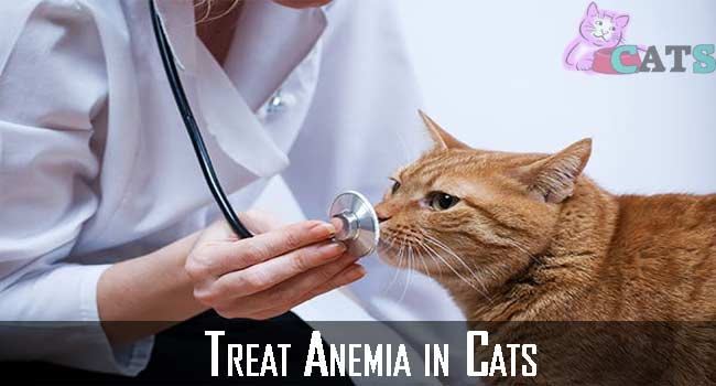 Treat Anemia in Cats