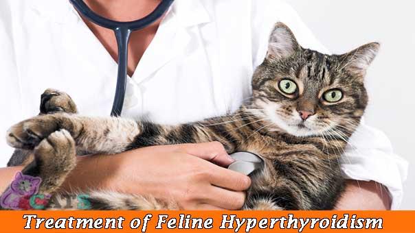 Treatment of Feline Hyperthyroidism