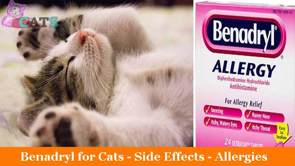 Benadryl for Cats, Side Effects | Allergies | Usage