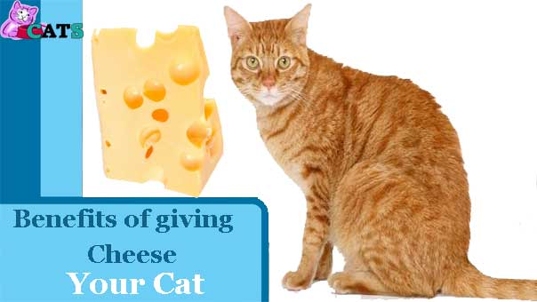 Benefits of giving Cheese