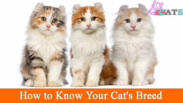 How to Know Your Cat's Breed