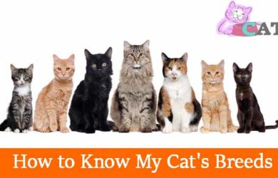 How to Know My Cat's Breeds