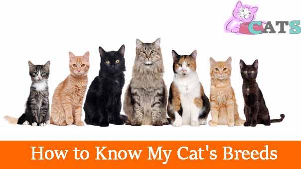 cat's breeds