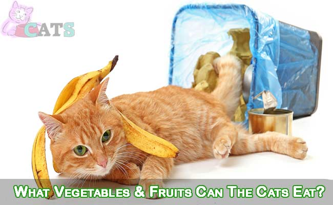 What Vegetables & Fruits Can The Cats Eat?