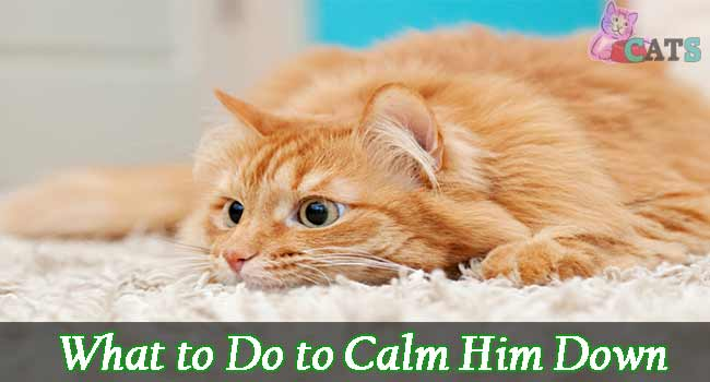 What to Do to Calm Him Down