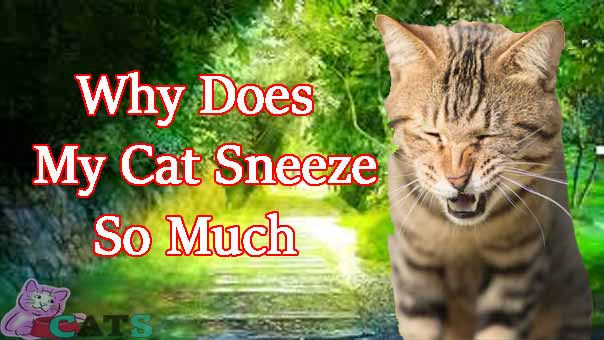 Why Does My Cat Sneeze So Much