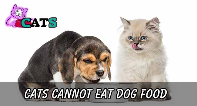 cats cannot eat dog food
