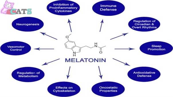 Functions of Melatonin