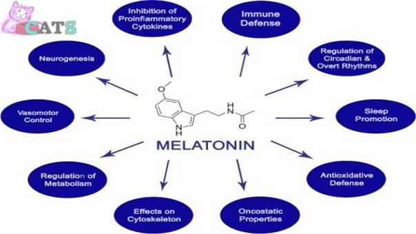 Functions of Melatonin