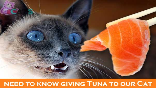 need to know about giving Tuna to our Cat