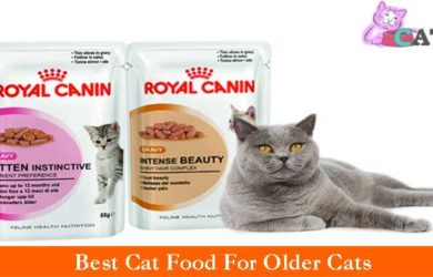 Best Cat Food For Older Cats