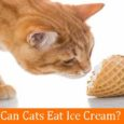 Can Cats Eat Ice Cream