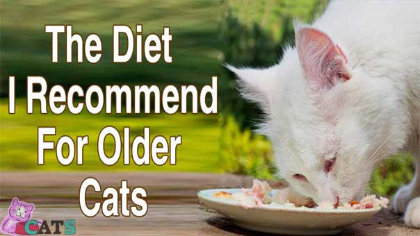 Recommend for Older Cats