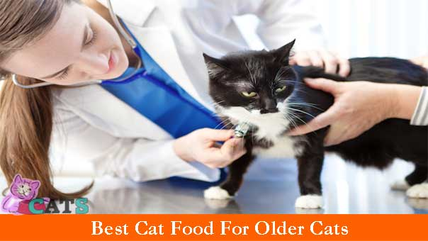 Supplements For Senior Cats