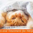 Cat Herpes