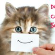 do cats smile