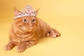 orange female cat names