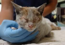 3 months old kitten precautions
