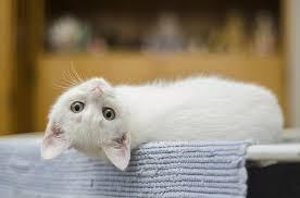 white-cat-names