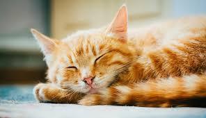 orange male cat names
