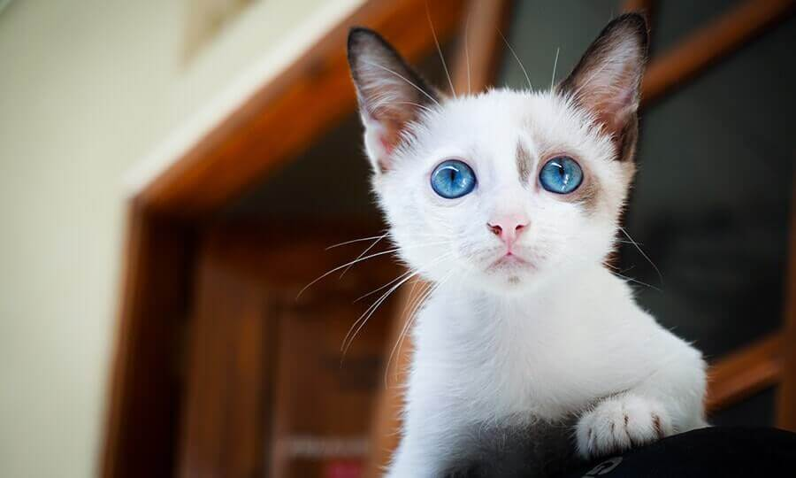 names for white cats