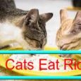 Can Cats Eat Rice