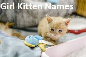 Girl Kitten Names