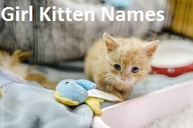 Girl Kitten Names