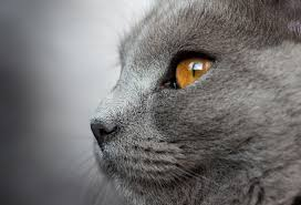 Names for grey cats