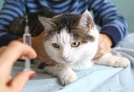 diabetic cat food