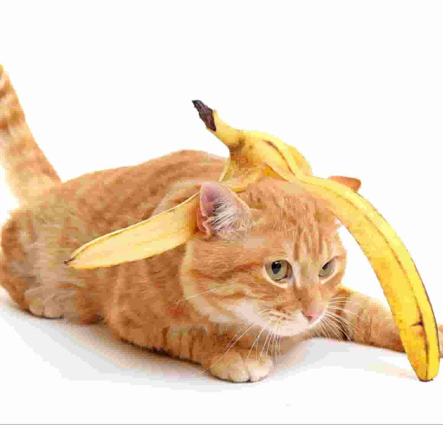 cats-Eat-Bananas