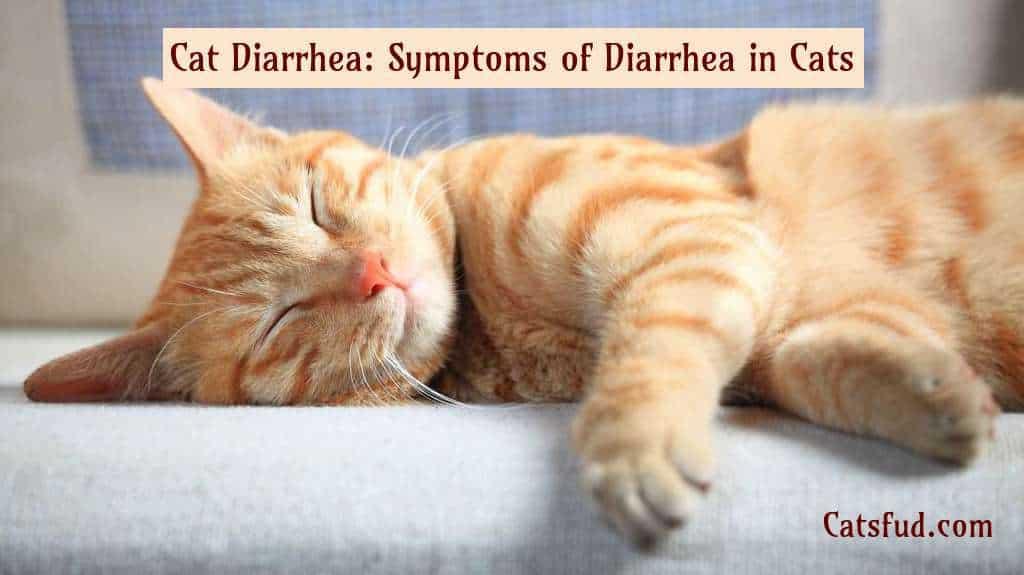 Cat Diarrhea
