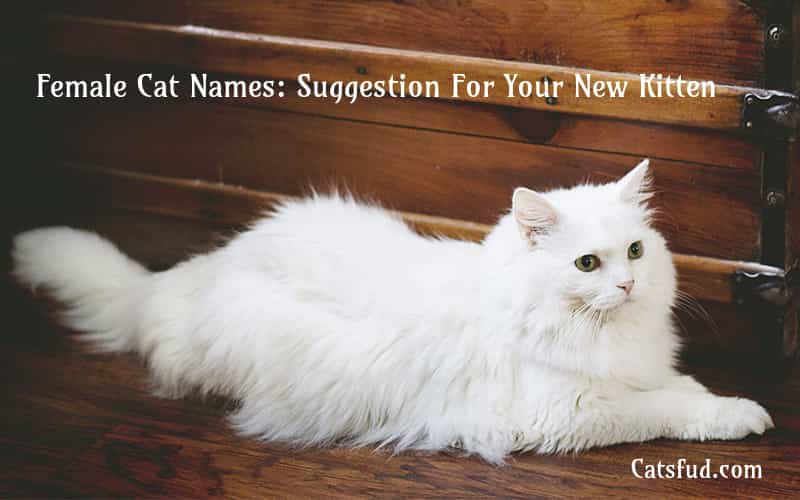 Female Cat Names: Suggestion For Your New Kitten