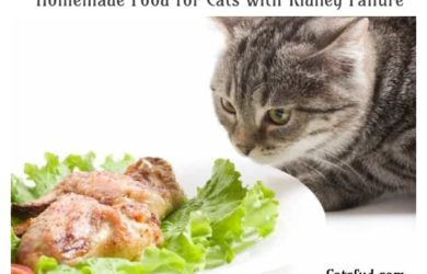 Homemade Food for Cats with Kidney Failure