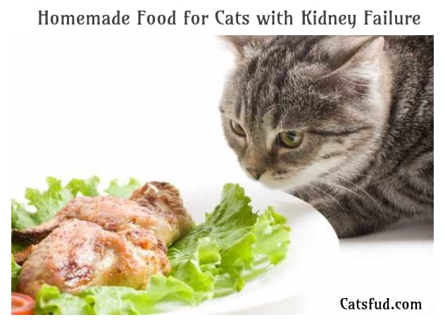 homemade cat food with Kidney Failure